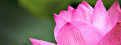 lotus-614494_1280